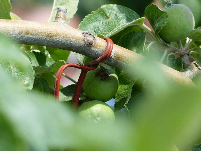 Un diffuseur de phéromones permet de stopper la reproduction des insectes ravageurs.