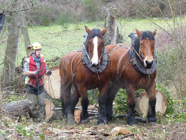 Le débardage à l'aide de chevaux est une solution technique particulièrement adaptée aux secteurs difficiles d'accès.