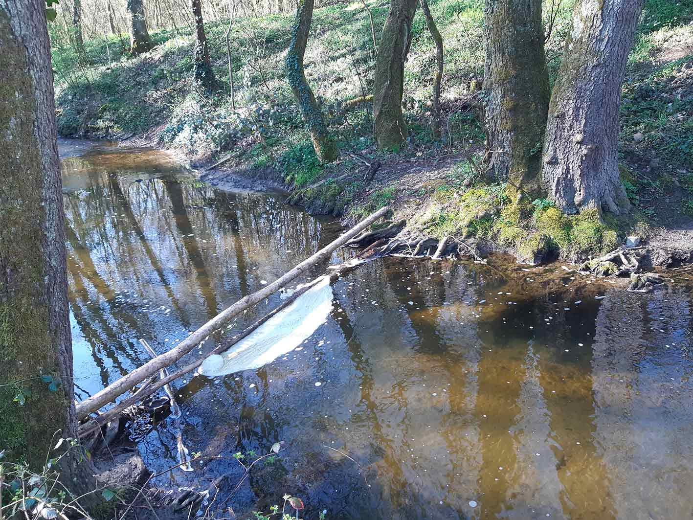 Le bois mort et la décomposition des feuilles favorisent l'apparition d'amas de mousse sur le cours d'eau.