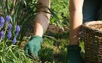 Lutter contre les mauvaises herbes