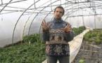 Fertilisation du sol en maraîchage