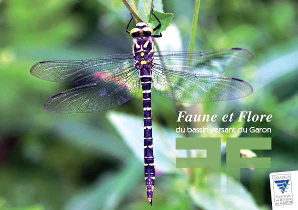 Un guide sur la faune et la flore