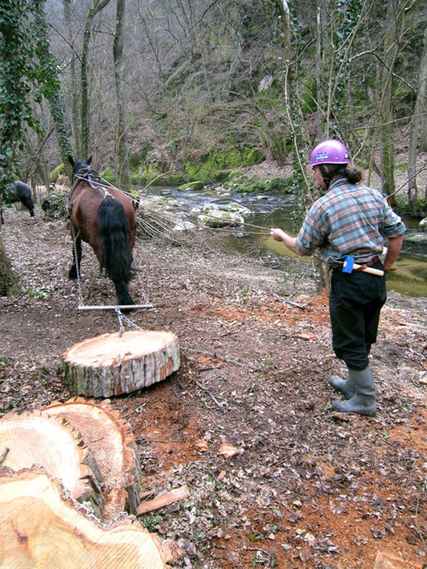 Entretien de berges Vallée en Barray